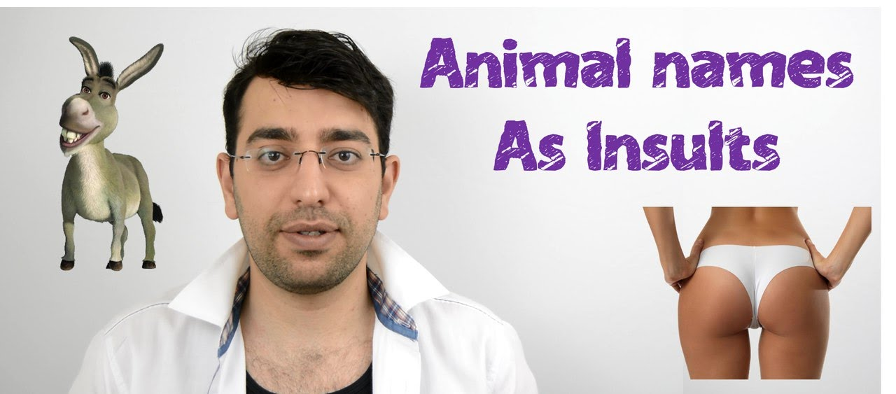 Animal names as insulting words in English