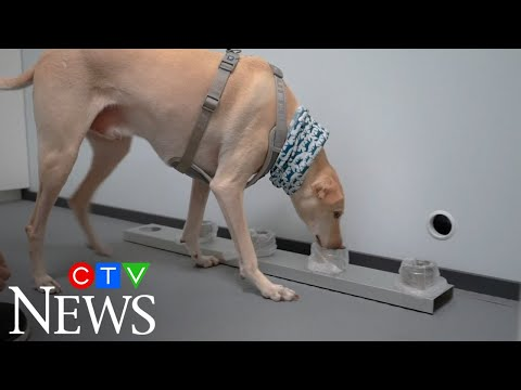 Finland airport uses dogs to detect COVID-19