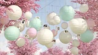 AsimO - Свадьба Ольги и Алексея