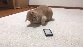ルンバのフィルターに猫パンチするひのきが小さい時と変わらずかわいい...