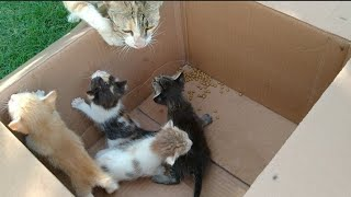 Mom Cat Leaving Her Kittens In Human protection And Going To Have Some Rest