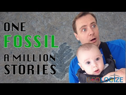 ONE Fossil, a MILLION stories!