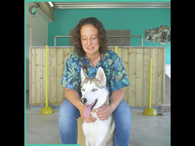 L'interview clinique de Bénédicte   Clinique vétérinaire Saint Roch