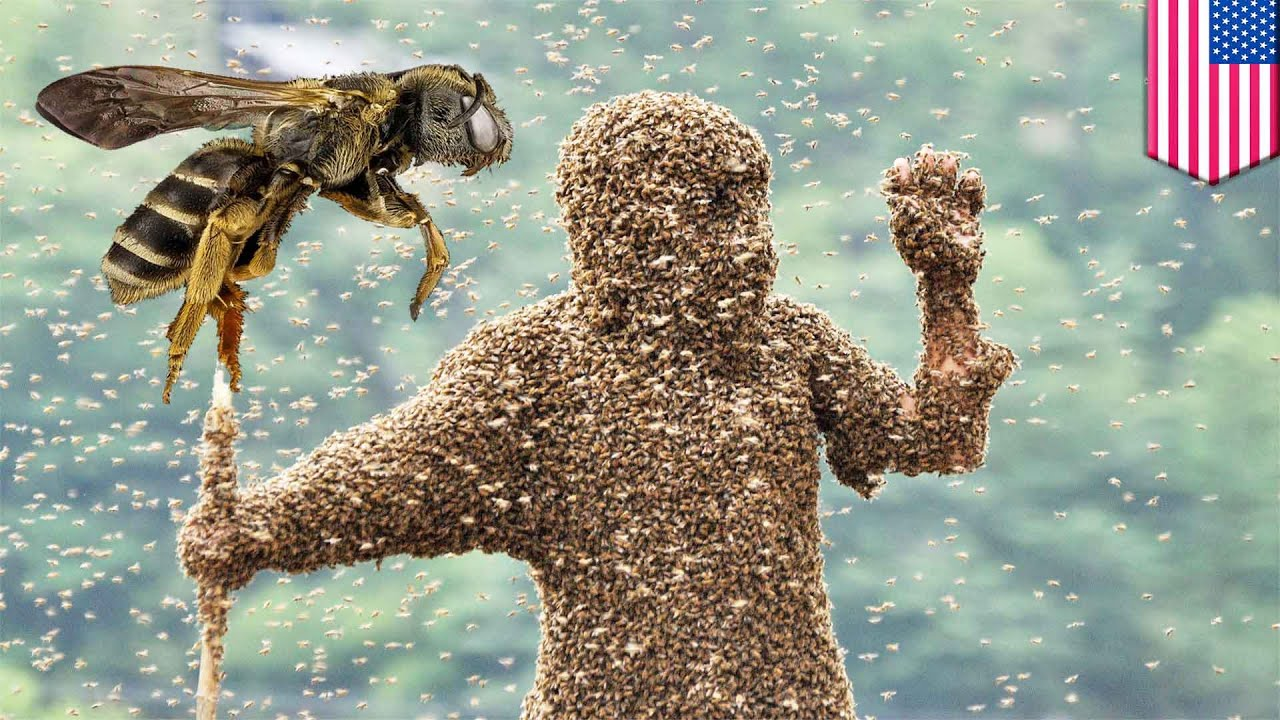 Bees kill man: Hiker stung 1000 times, killed by swarm of ...