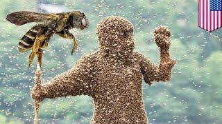 Bees kill man: Hiker stung 1000 times, killed by swarm of bees in Arizona mountain park - TomoNews