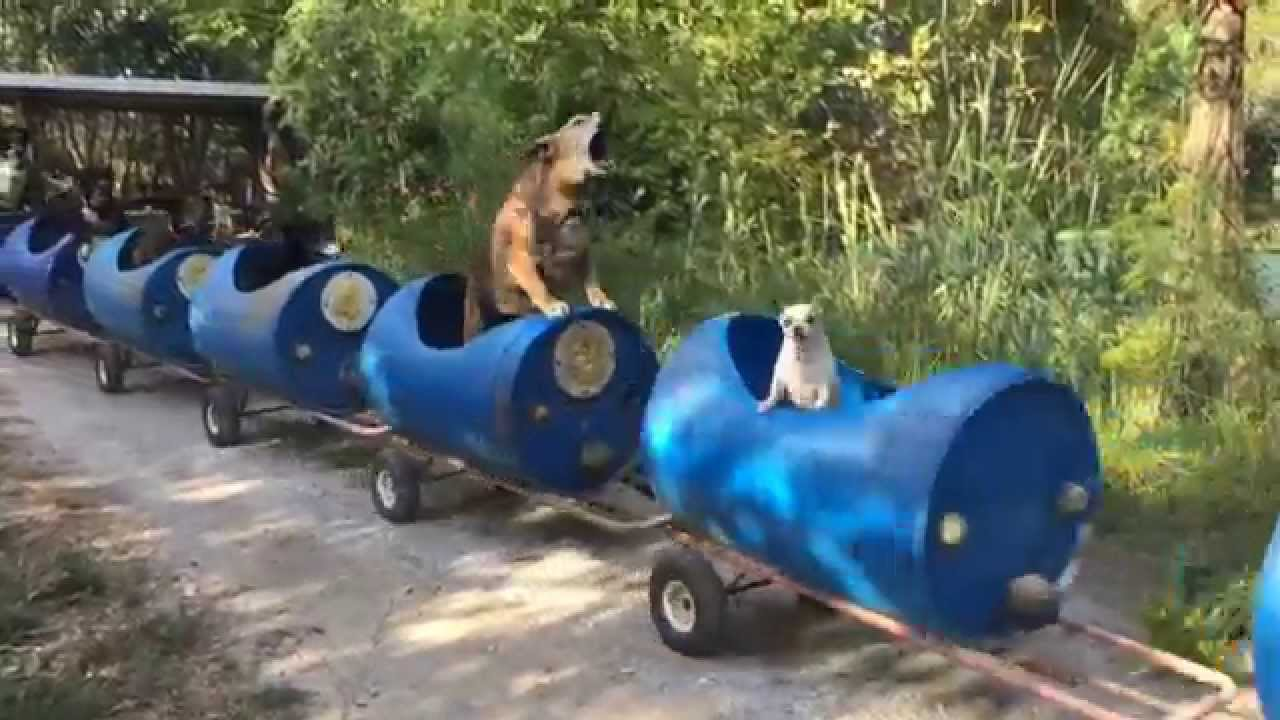 Fort Worth Rescue Dog Train