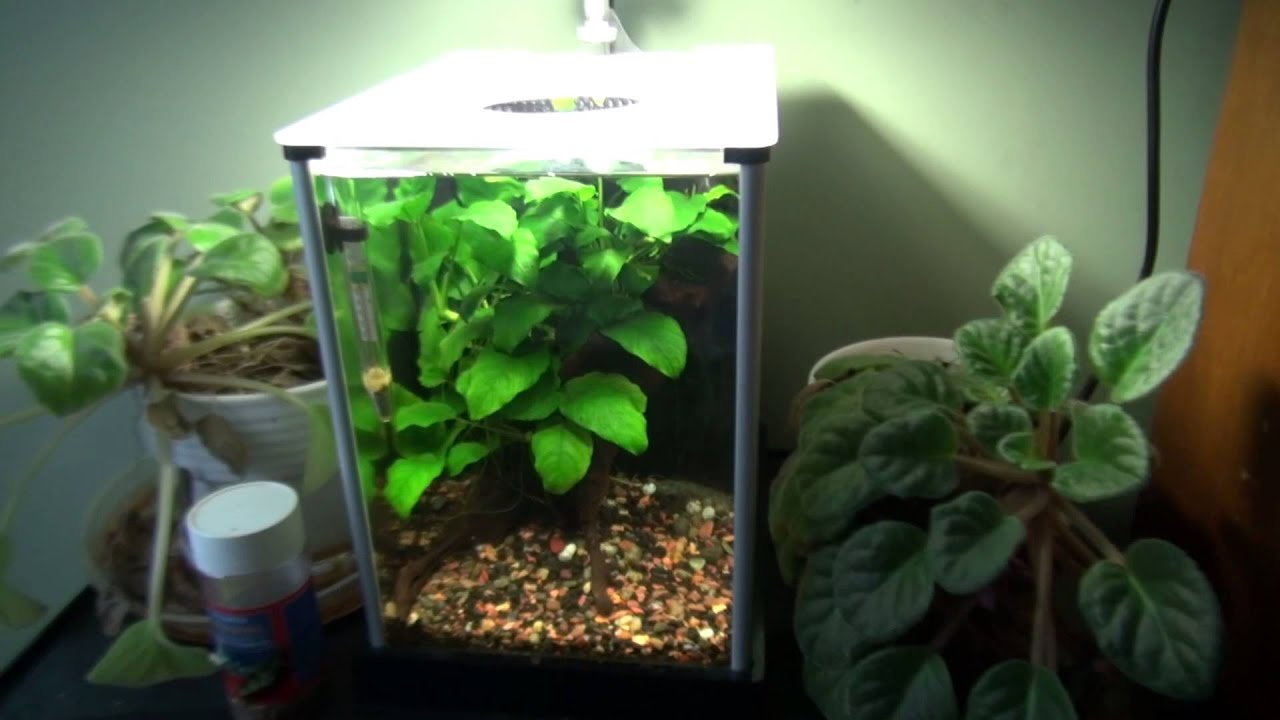 Fluval Spec 5 An 2 Gallon Update   YouTube