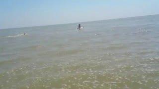Змея в Азовском море ( Ейск ) / Snake in the Sea of Azov ( Yeysk , Russia)