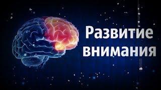 Развитие внимания (концентрация)\ Развитие памяти