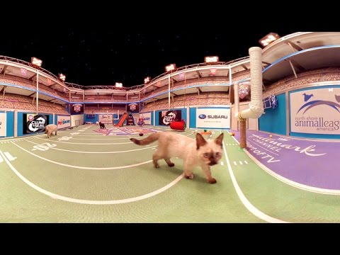 Kitten Bowl IV in 360°!  - Hallmark Channel