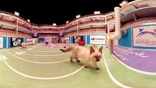 Kitten Bowl IV in 360°!  - Hallmark Channel thumbnail