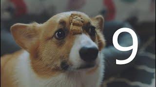 IKEA 「低價創造無價-狗狗篇」廣告影片