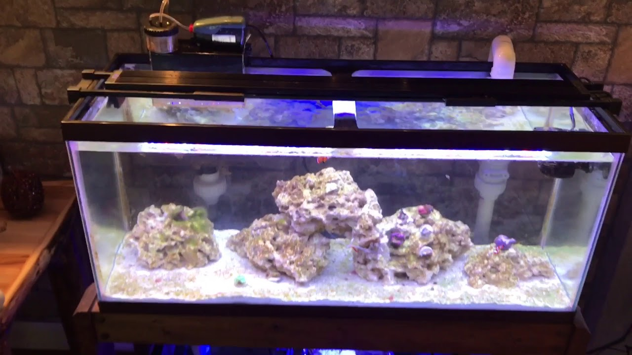 Fluval sea marine reef led lighting reviews lilianduval fluval 2 0 marine and reef 25k led light review you aloadofball Image collections