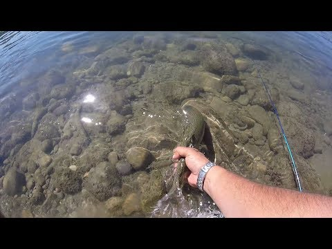 Bow River Trout Fishing. Calgary AB. Mid August 2017
