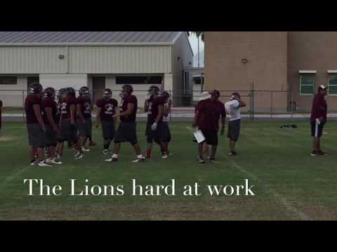 The Lions Hard At Work
