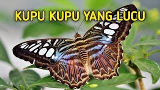 KUPU KUPU YANG LUCU LAGU ANAK INDONESIA