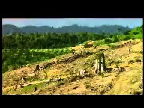 Systematic Destruction of Borneo Rainforest