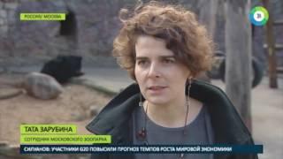 Ранний подъем  весна разбудила зверей в Московском зоопарке   МИР24