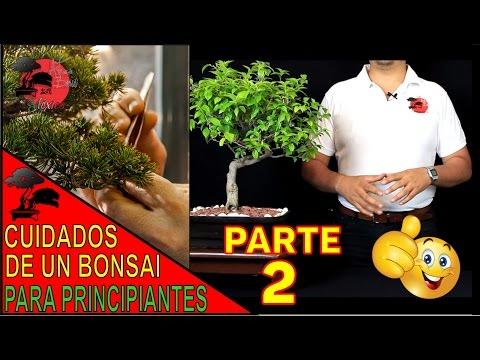 C mo cuidar tu primer bonsai 39 parte 1 39 especies apta for Como iniciar un vivero en casa