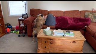 reuben-the-bulldog-biding-his-time-part-2
