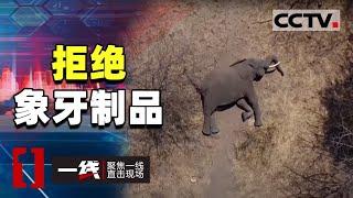 《一线》别让洁白的象牙带血!拒绝杀戮 拒绝象牙制品 20201112 | CCTV社会与法 - YouTube