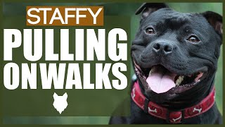 How To STOP Your STAFFORDSHIRE BULL TERRIER PULLING ON WALKS