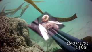 Video Pesca Submarina Póvoa Varzim download MP3, 3GP, MP4, WEBM, AVI, FLV Desember 2017