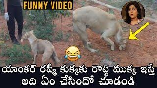 FUNNY VIDEO : Jabardasth Anchor Rashmi Feeding Street Dogs   Daily Culture