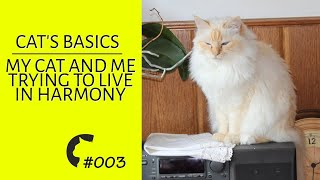 My cat and me trying to live in harmony  | Basic stuff #3 | Fluffy Birman cats