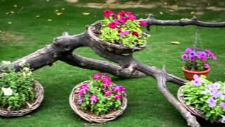 My Beautiful Garden & lovely Roses