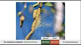 Асит - метод лечения аллергии - YouTube