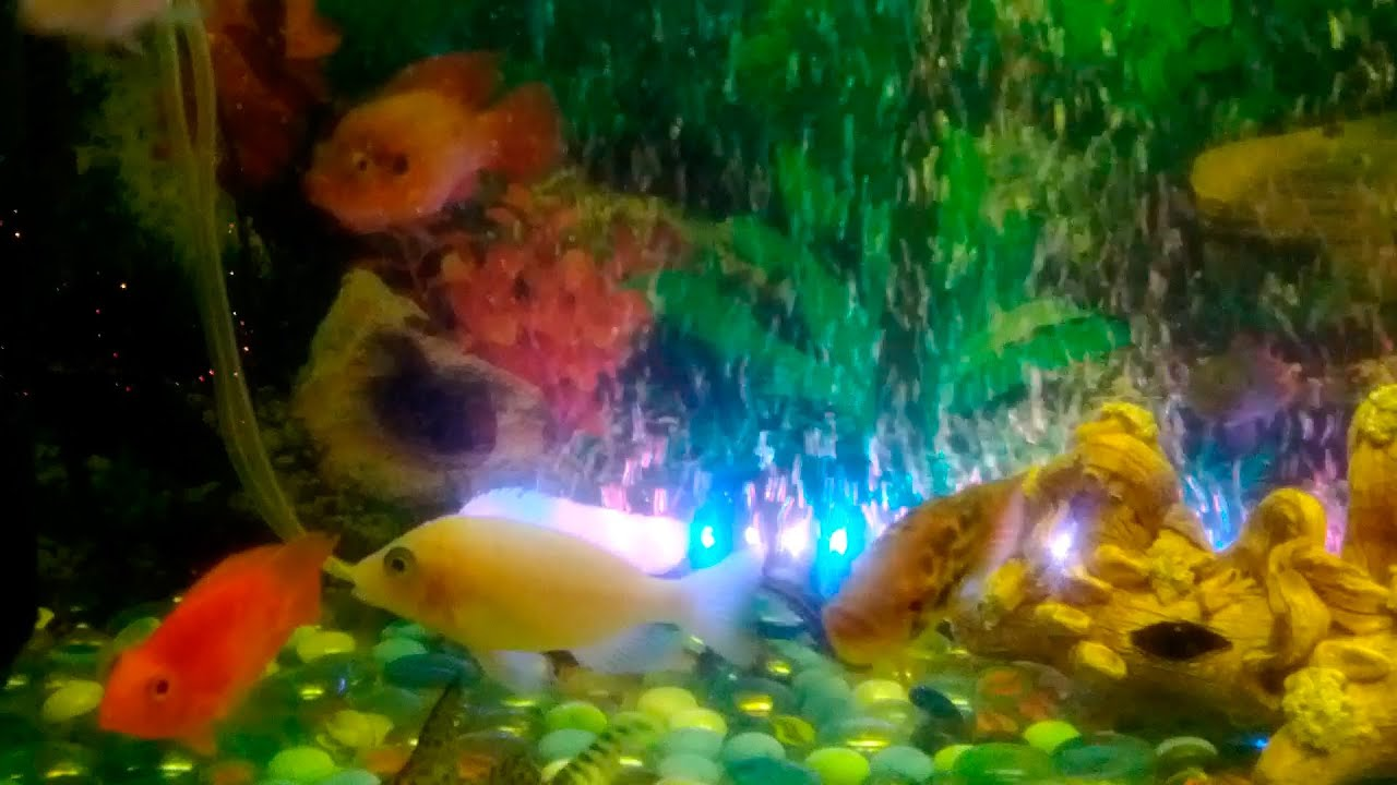 Оборудование для аквариумов по доступным ценам в каталоге интернет магазина 21vek. By. Оборудование для аквариумов — большой выбор товаров.
