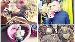 ❄ VLOGMAS ❄ Pyszna kawa, Spacer z psami , Zakupy i mini haul