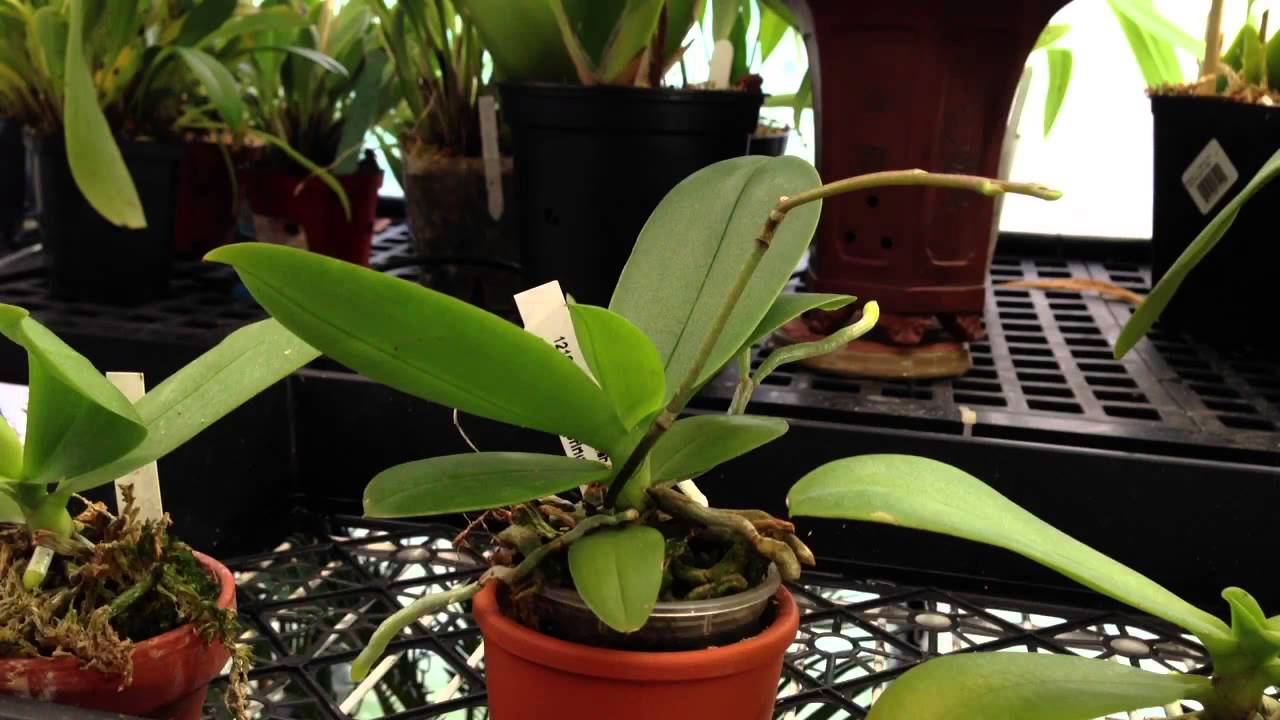 How To Care For Orchids Rebloom A Phalaenopsis Orchid On An Old