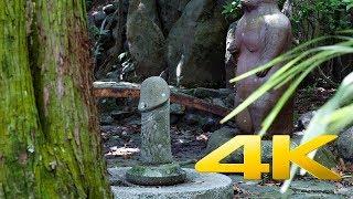 За Shrine Uwajima - Ehime - 多賀神社 - 4K Ultra HD