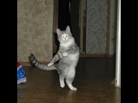 Cat Dance - Funny Cat Compilation #1