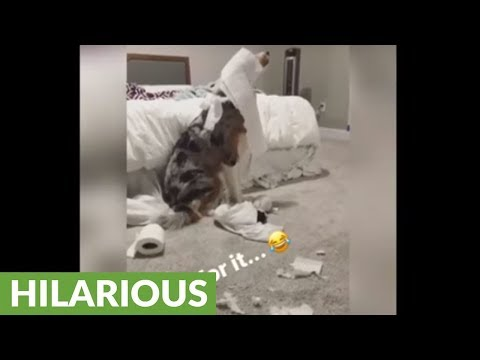 Is this the most guilty dog ever?