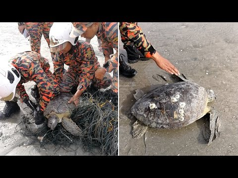 Firefighters Rescue Turtle Trapped In Fishing Net