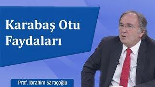 Karabaş Otu Faydaları - İbrahim Saraçoğlu