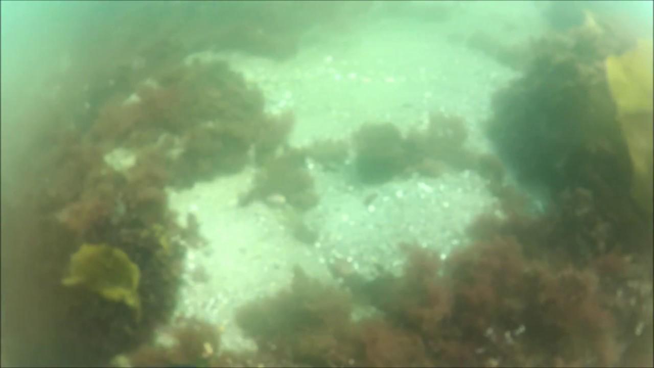 Naui Certification Dive Front Beach Massachusetts Youtube