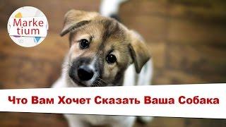 Что Вам Хочет Сказать Ваша Собака!