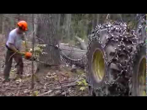Wescott Logging - Cutting Some Pine: Wescott Logging - Cutting down a few Pine trees.
