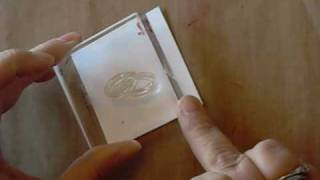 Kitchen Sink Stamps Multi Step Wedding Rings
