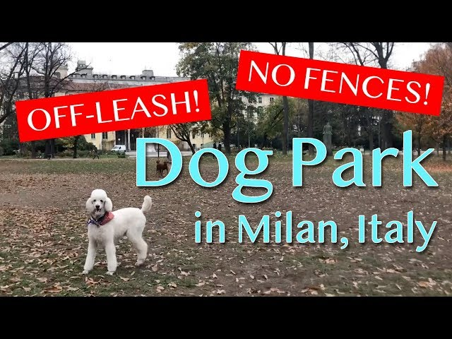 Dog Park in Milan, Italy