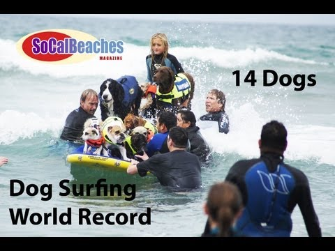 Dog Surfing World Record 14 Dogs on Surfboard Ride