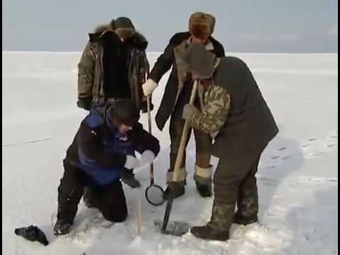знакомства кирс кировской обл