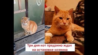 Три дня кот преданно ждал на остановке хозяина в холод