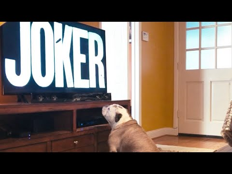 "Bulldog Reaction to ""JOKER"" (2019) Final Trailer"