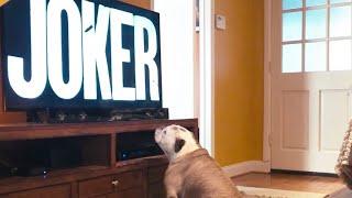 "Bulldog Reaction to ""JOKER"" (2019) Final Trailer"