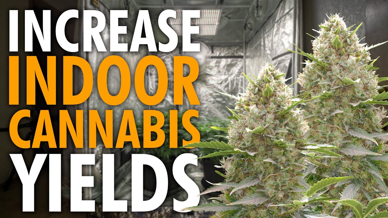 Download Bigger Yields in Less Space – Complete Cannabis Training Guide